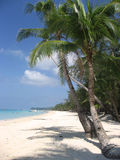 Boracay beach palm trees philippines. Fine white sand beach of boracay in the philippines Royalty Free Stock Image