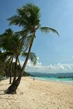 Boracay island beach and palm trees. Fine white sand beach and tall green palm trees of popular tourist destination boracay island in the philippines Royalty Free Stock Photo