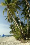 Boracay island white beach palm trees philippines. Fine white sand and lush coconut palm trees beach of tropical boracay island in the philippines Royalty Free Stock Photography