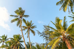 Boracay Palms Stock Image