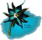 Borage Бесплатная Иллюстрация