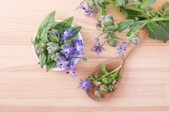 Borage with blue flowers. Top view of Bowl and wooden spoon with Borage on a wooden background Royalty Free Stock Photo