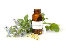 Borage oil Stock Images