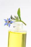 Borage oil, Borago Officinalis Royalty Free Stock Photo
