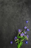 Borage over over dark board Stock Image