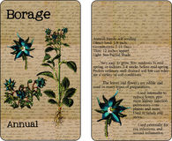 Borage Vintage Seed Packet Stock Photography