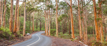 Boranup Karee Forest Royalty Free Stock Photography