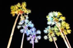 Borassus flabellifer Royalty Free Stock Photos
