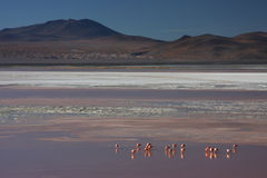 Borax band and flamingos on Laguna Colorada Stock Photo