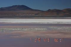 Boraxband und -flamingos auf Laguna Colorada Stockfoto