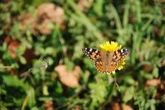 borboleta Imagens de Stock