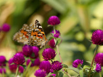 borboleta Fotos de Stock