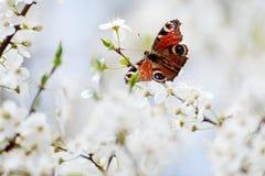 borboleta fotos de stock royalty free