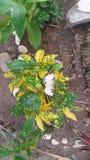 A borboleta Foto de Stock