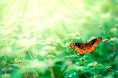 Borboleta alaranjada bonita fotos de stock royalty free