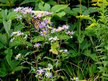 Borboleta alaranjada em wildflowers imagens de stock royalty free