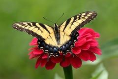 Borboleta amarela de Swallowtail no jardim imagens de stock royalty free