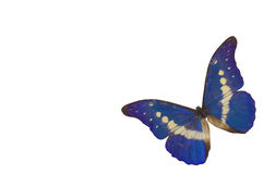 A borboleta azul 4 fotos de stock