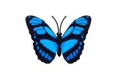 Borboleta azul bonita Imagens de Stock Royalty Free
