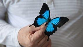 Borboleta azul do swallowtail da montanha filme