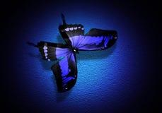 Borboleta azul no fundo azul Imagem de Stock