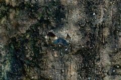 A borboleta azul senta-se em uma pedra fotografia de stock royalty free