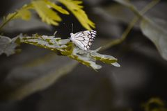 A borboleta bonita imagem de stock royalty free