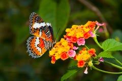 Borboleta bonita Imagem de Stock Royalty Free