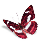 Borboleta bonita Imagens de Stock Royalty Free