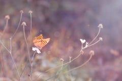 Borboleta bonita da mola em uma lâmina do close-up da grama na luz roxa fotografia de stock