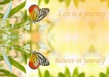 A borboleta bonita gêmea absorve algum doce das flores no sunn Fotografia de Stock Royalty Free