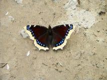 A borboleta bonita seca suas asas nos raios do sol foto de stock
