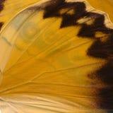 A borboleta bonita voa o fundo no fim alaranjado, marrom e preto acima foto de stock royalty free
