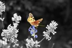 Borboleta colorida em uma flor imagem de stock
