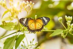 borboleta colorida no jardim Foto de Stock