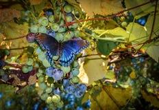 Borboleta colorida vibrante foto de stock