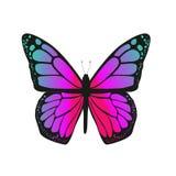 A borboleta com asas cor-de-rosa Imagem de Stock Royalty Free