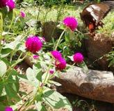 Borboleta com flor imagem de stock