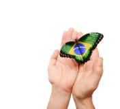 Borboleta da bandeira de Brasil Fotografia de Stock