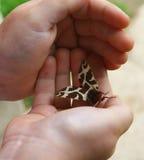 Borboleta da noite nos braços Fotografia de Stock Royalty Free