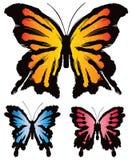 Borboleta das borboletas Imagem de Stock