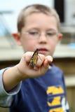Borboleta de monarca nova da terra arrendada do menino Foto de Stock