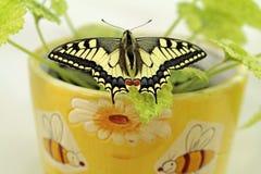Borboleta de Swallowtail, proteção da espécie imagens de stock
