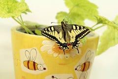 Borboleta de Swallowtail, segura os insetos imagens de stock