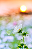 Borboleta descansada em uma flor Imagens de Stock