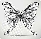 Borboleta, desenho da mão. Ilustração do vetor. ilustração stock