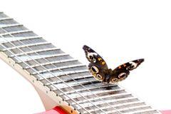 Borboleta do Buckeye em uma guitarra elétrica Imagem de Stock Royalty Free
