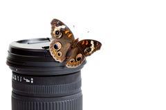 Borboleta do Buckeye em uma lente de câmera imagens de stock royalty free