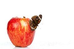Borboleta do Buckeye em uma maçã Fotos de Stock Royalty Free