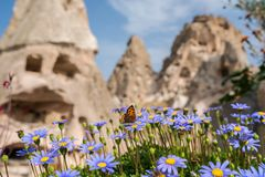 Borboleta do close up na flor com o castelo magnífico de Uchisar em Cappadocia imagem de stock
